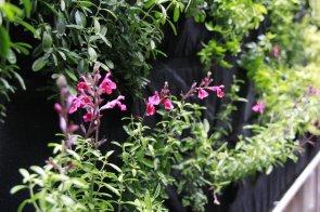 Plantas Denver