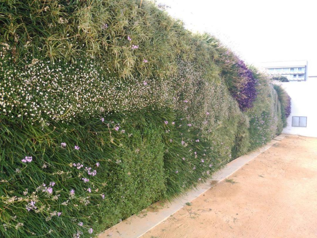 Jardín vertical en Cádiz el día 1 de Septiembre de 2016