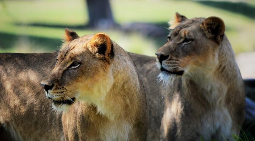 safari_aitina