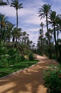 el-palmeralweb