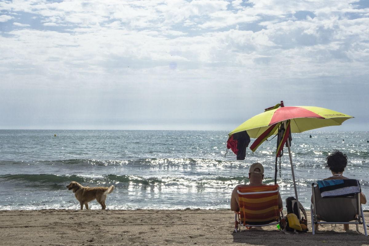 Playa Agua Amarga La Playa Adaptada Para Perros De Alicante