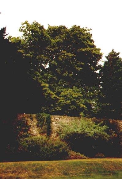 Alice tree