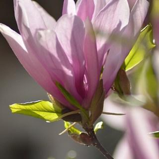 Frühlingsschön
