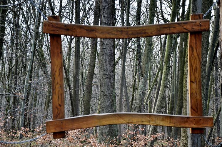 Hainich - Wald gerahmt
