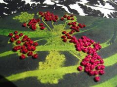 gravure-immersion-végétale-alice-heit8