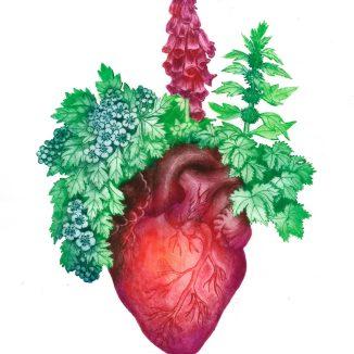 """""""les plantes du coeur"""" imprimées sur soie, pointe sèche."""