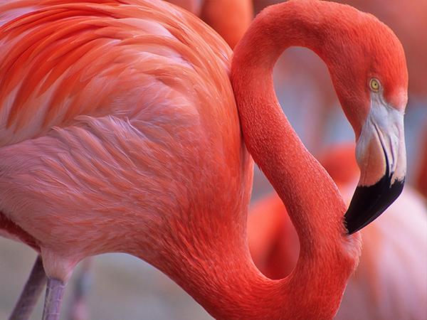 flamingos morocco alice morrison