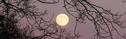 lunarlunacy