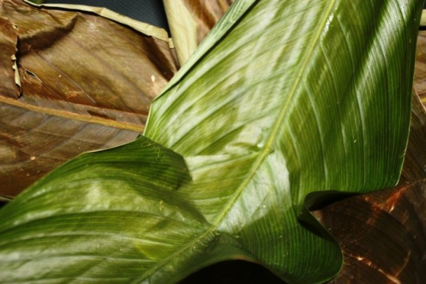 le mets de pistache (nnam ngon) (6)