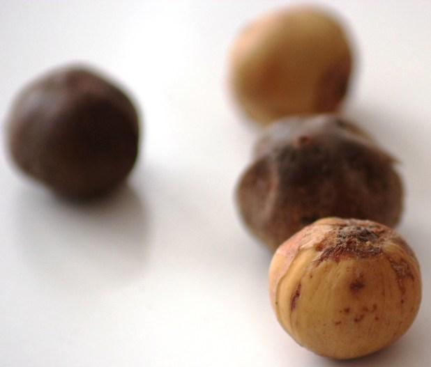hyomi, olum, rondelles, country onions