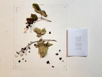 """Elvezia Allari: da """"Sfalci e ramaglie"""", installazione arborea con more di bosco selvatiche, 2018"""