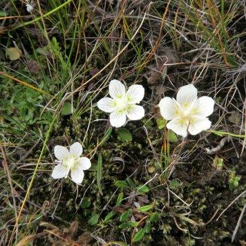 hengi-flowers
