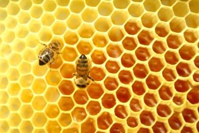 uses for honey 2