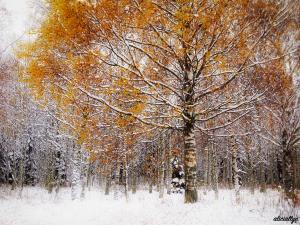 Autumn Snow I