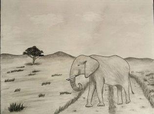 Elephant - Hope