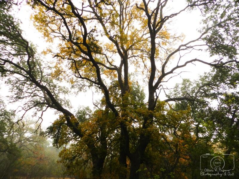 Trees - #1 - 121115