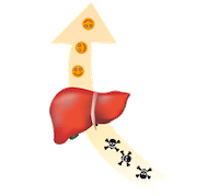 liver benzodiazepines metabolized