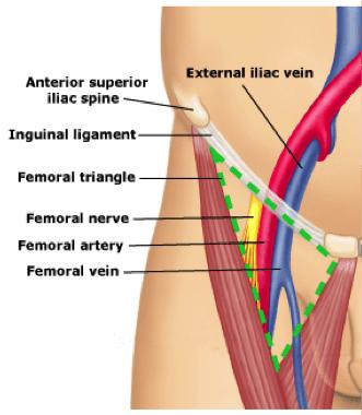 Femoral Vein anatomy - ALiEM