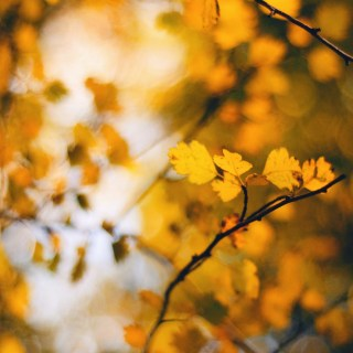 10 Science-Based Self Care Tips for Fall
