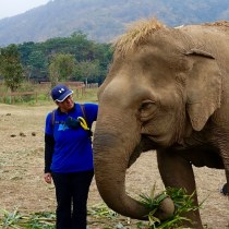 Gentle Giants: Visiting Thailand's Elephants