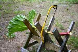 Rhubarb in sawbuck 2