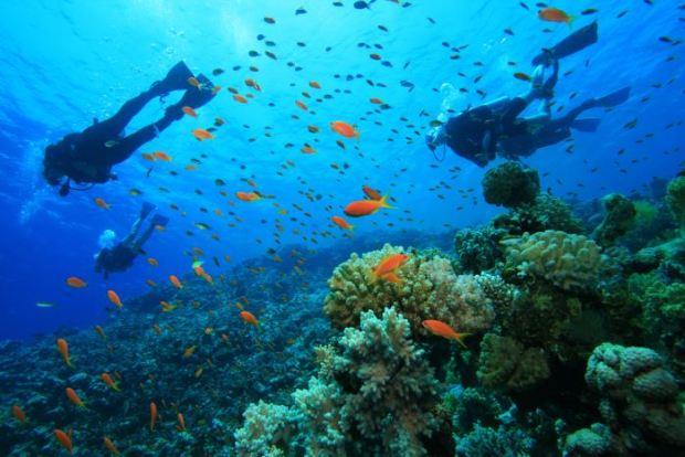 deportes para el verano submarinismo