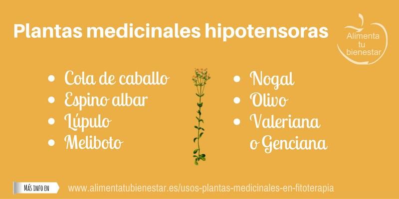 Plantas medicinales hipotensoras