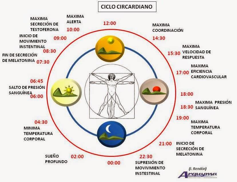 ciclo circadiano