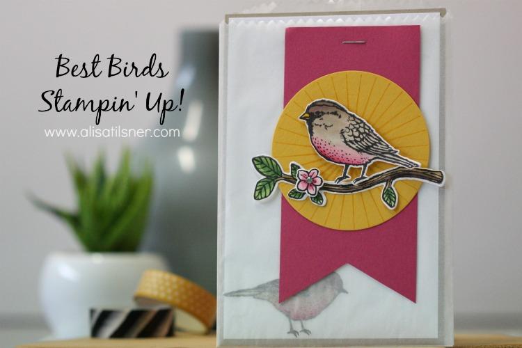 Best Birds