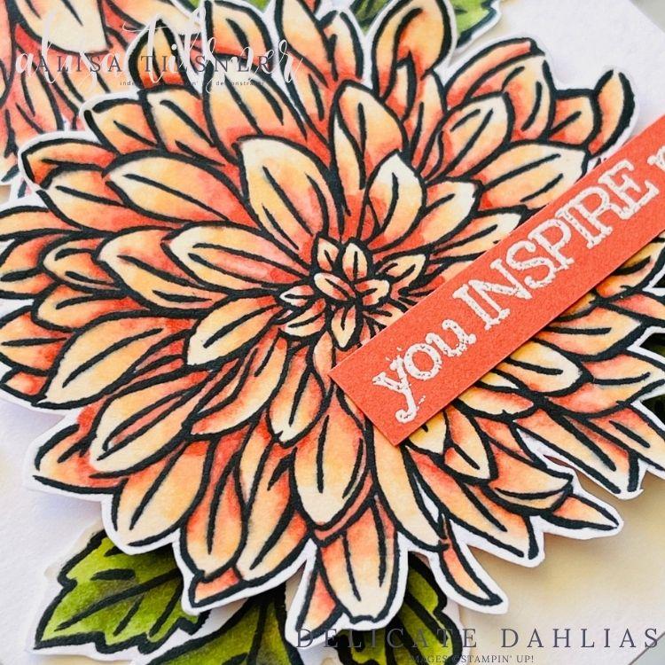 Delicate Dahlias
