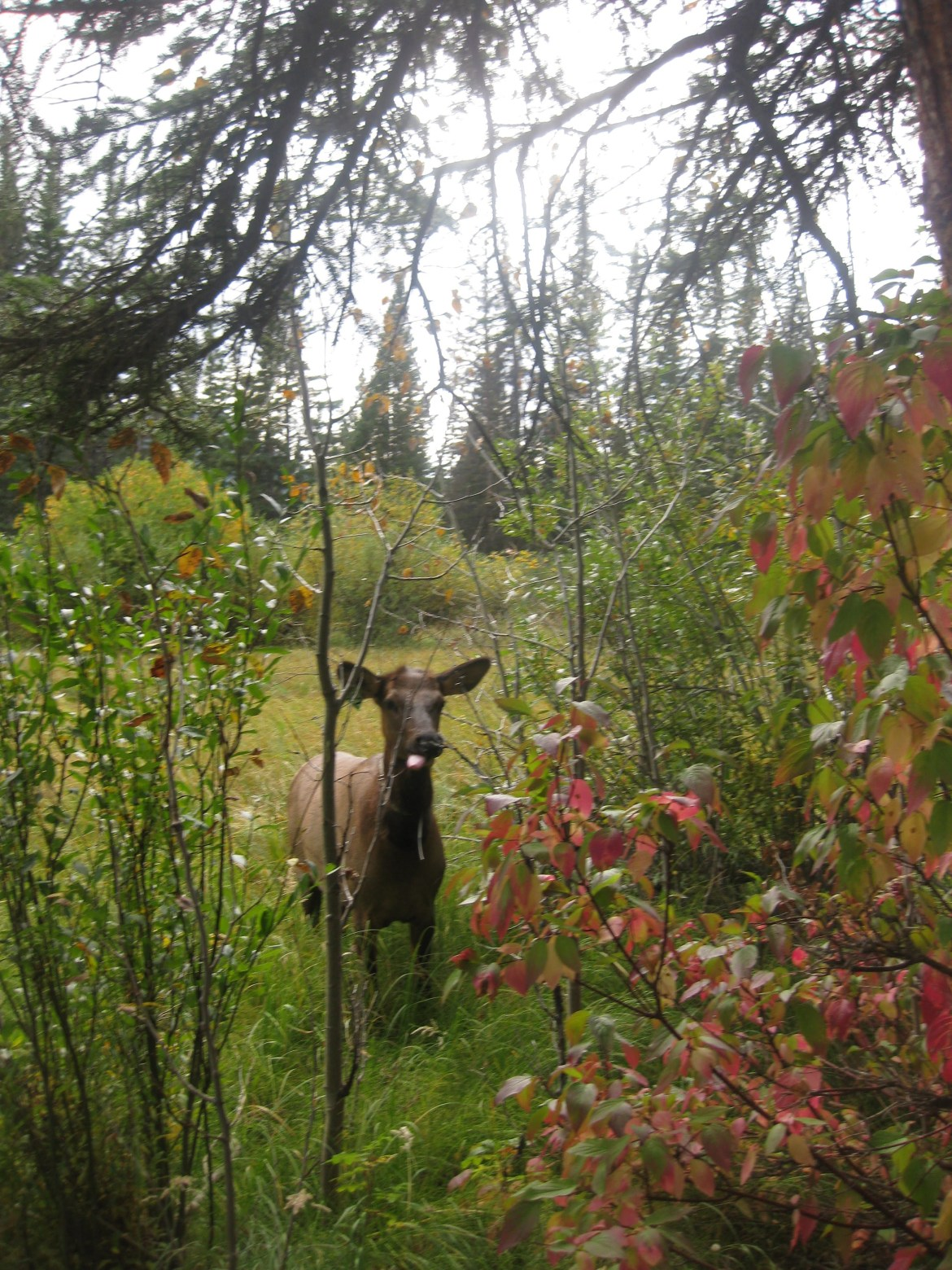 Banff Day 2 (86)