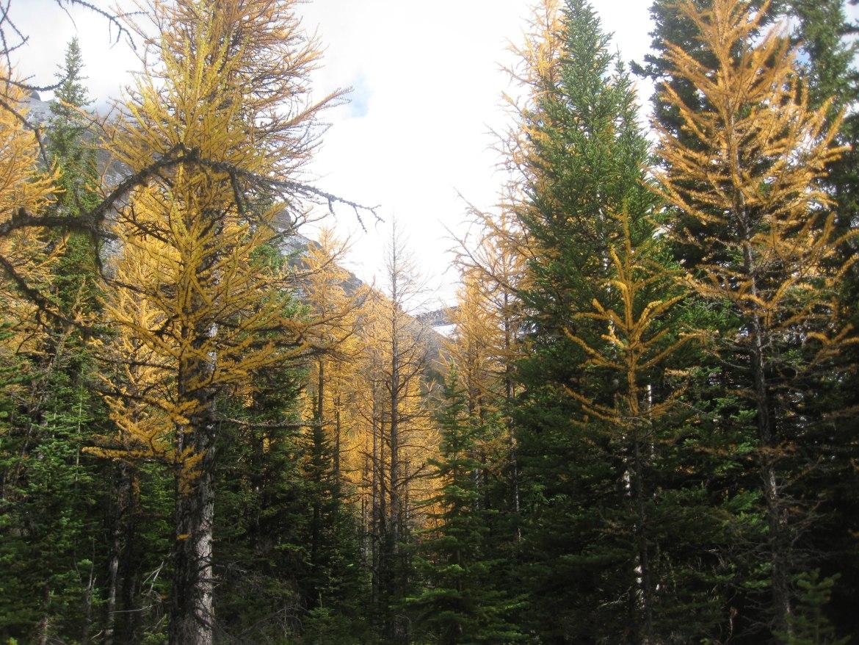Banff Day 5 (21)