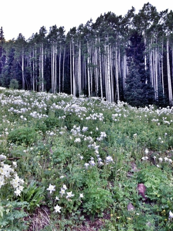 Aspen To Crested Butte, Backpacking, Hking With Kids, Colorado Wildflowers, Summer