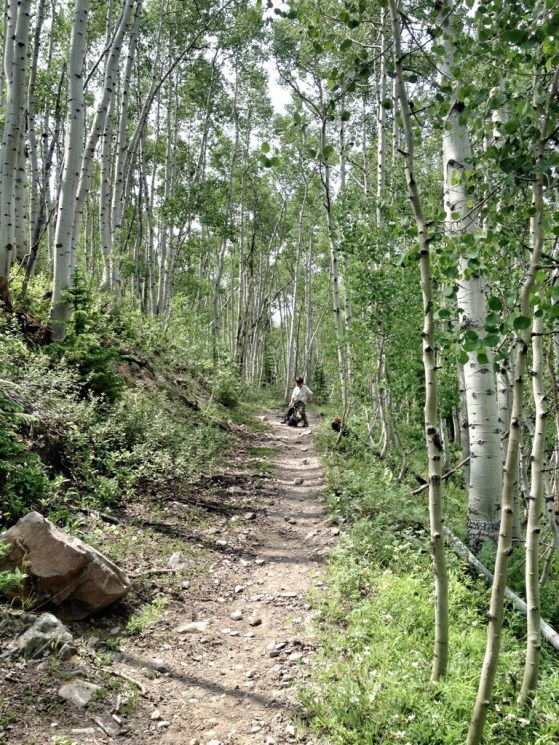 Aapen To Crested Butte Day 2, Backpacking, Colorado, Summer, Aspen Grove