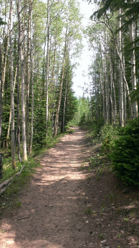 Aspen To Crested Butte, Backpacking, Hking With Kids, Colorado, Aspen Grove