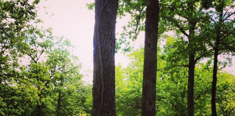 Lakewood Lake, Spring Green