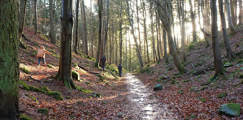Tyrebagger Walk, #48walks, Scotland, Forest