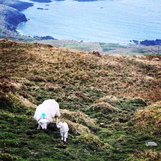 Snapshots of Ireland, County Kerry, Ring of Kerry