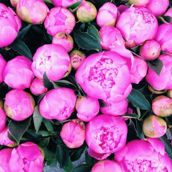 Snapshots of London, Summer, #IGTravelThursday, Columbia Road Flower Market