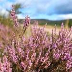 An August Walk in Aberdeenshire Scotland (40/48)