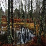 A November Walk in Aberdeenshire {Scotland} (45/48)