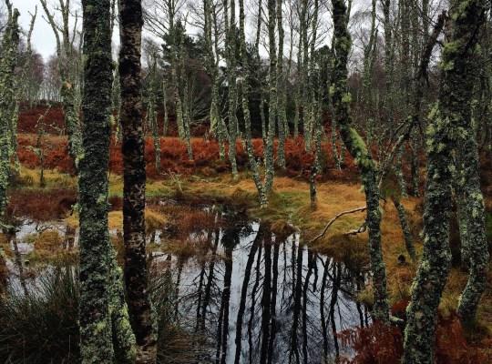 November, Aberdeenshire, Scotland, Loch Kinord