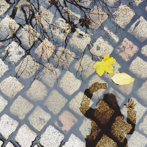 A Grateful Heart, Chasing Daylight, Alison Chino