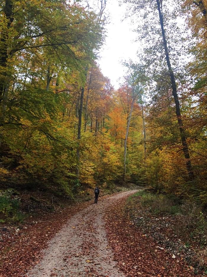 Snapshots of Fall in Germany, Autumn, Deutschland, Tubingen, Hiking with Ben in Germany