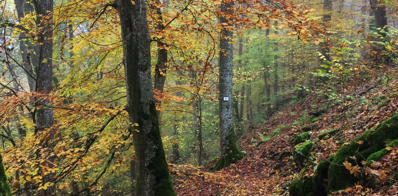 Germany in the Fall, Deutschland in Autumn, Tübingen