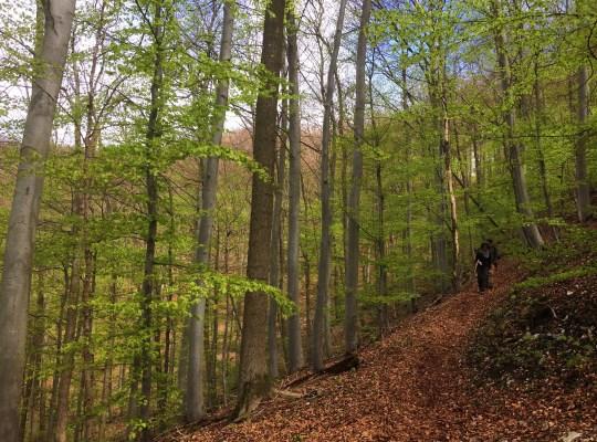 Bad Urach Hike, Creativity, Germany