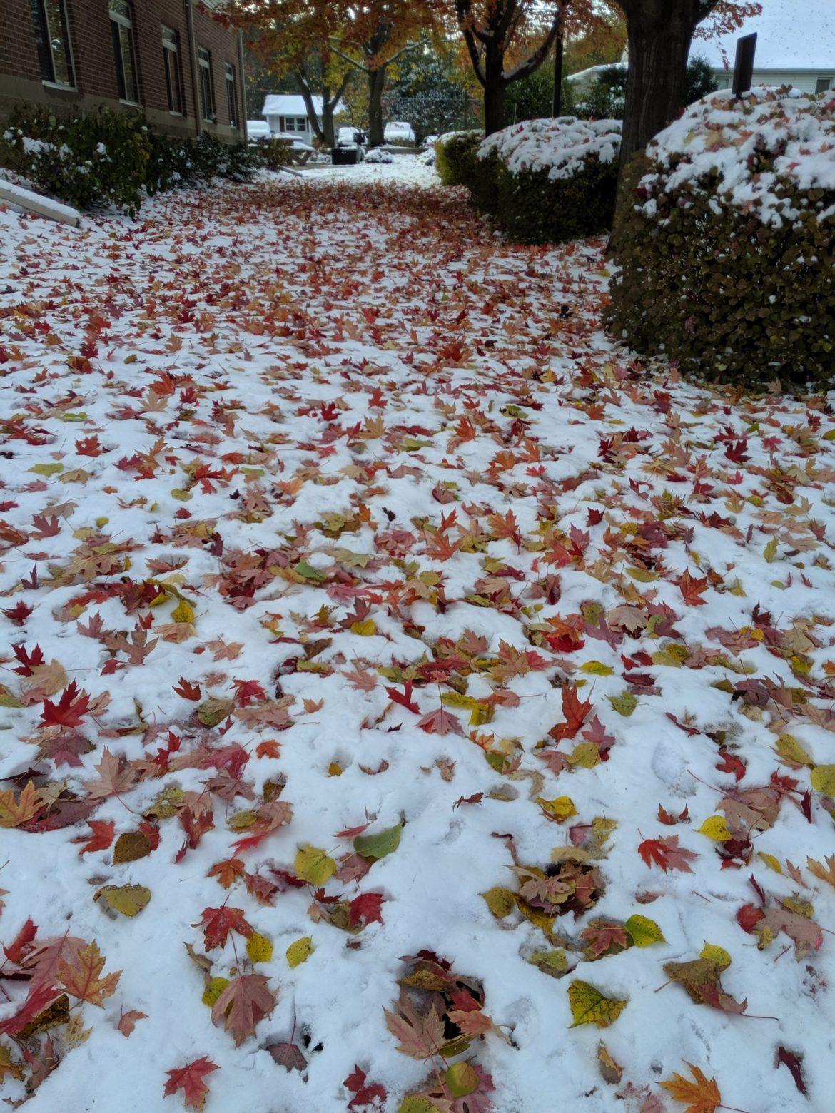 Winter in IL3