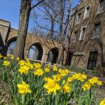 Spring's Arrival at Augustana + My Quarantine Resource List