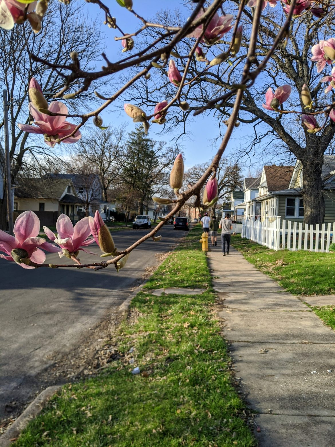 Spring at Augustana8