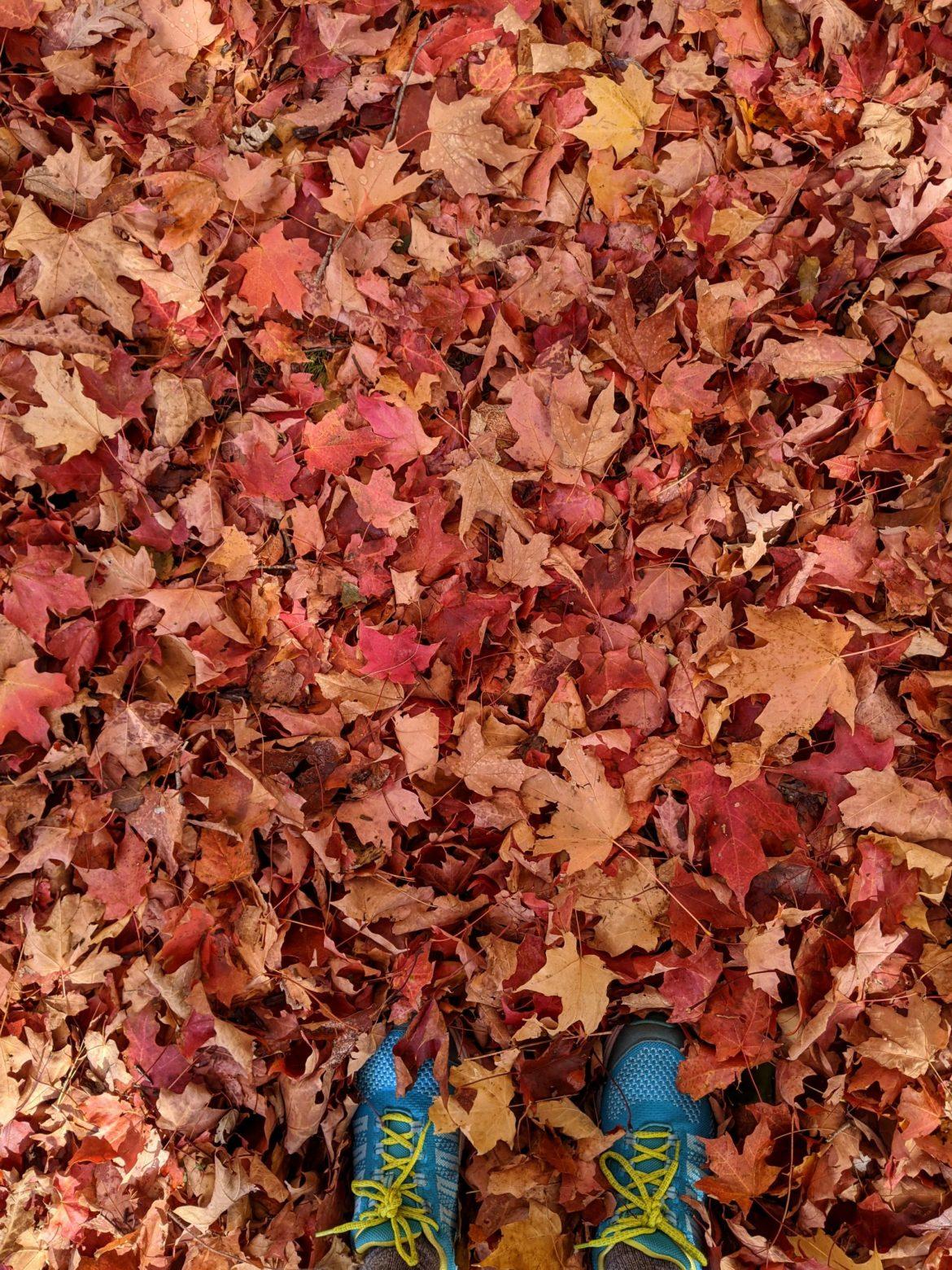 Red Leaves in October, Longer Walks